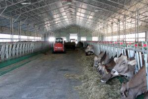 Молочна ферма